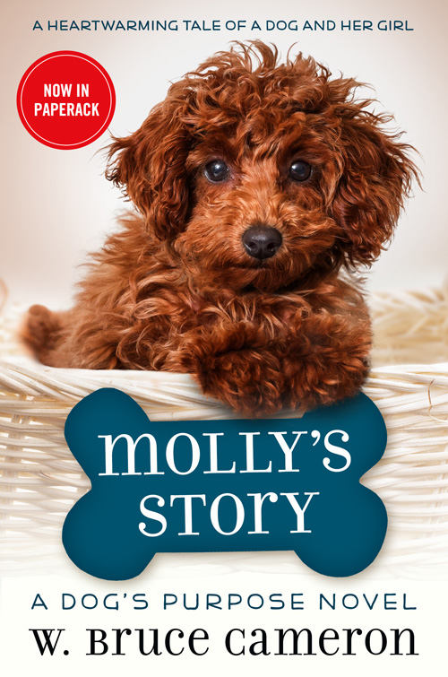 Mollys Story paperback