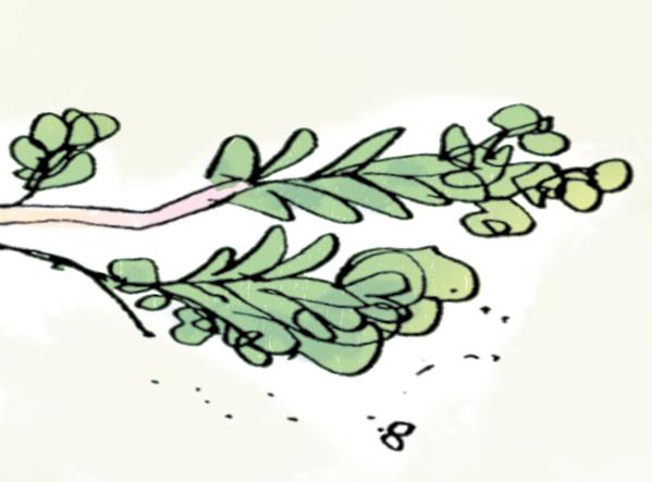 treebranch flipped