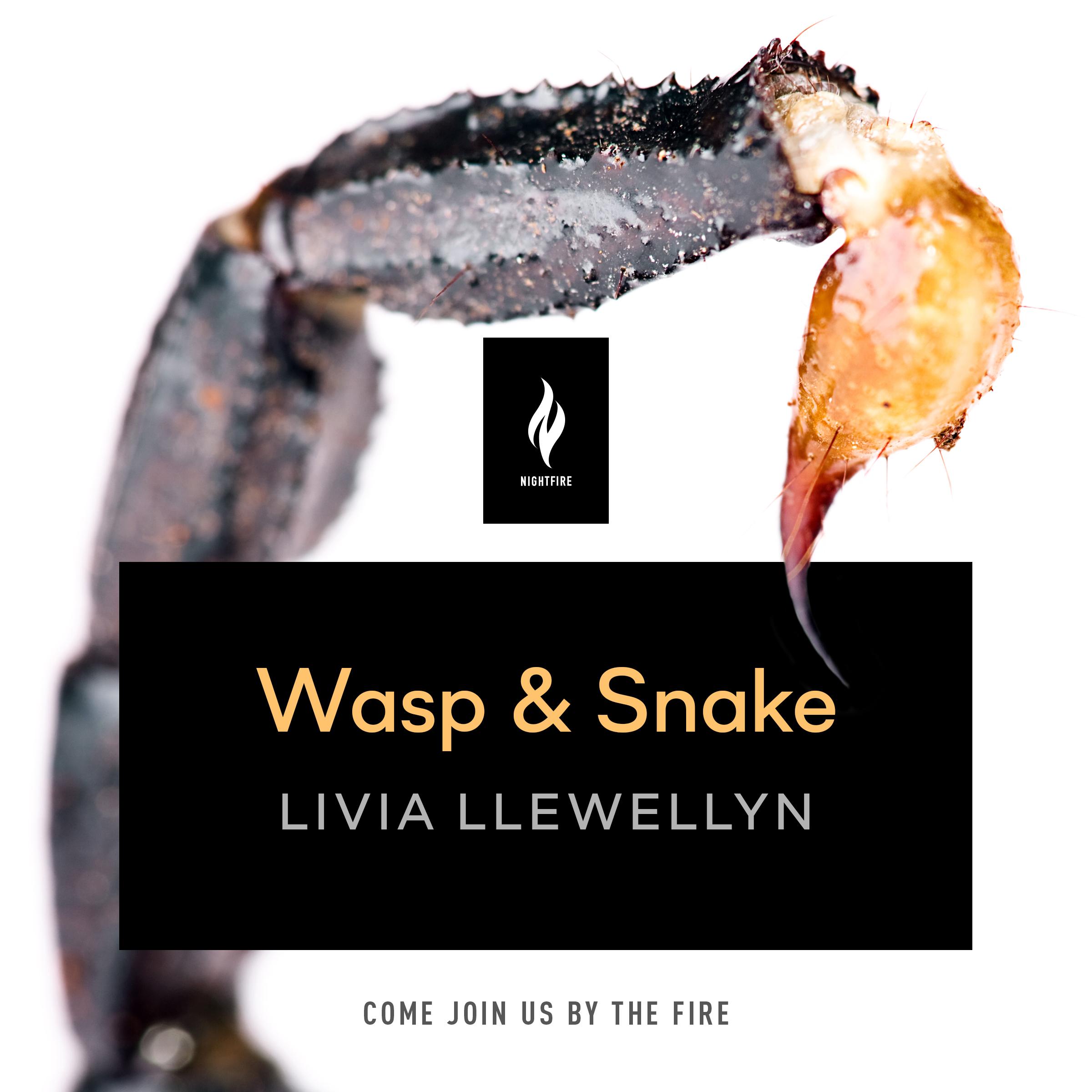 wasp and snake-b