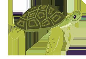 turtle_stelladiaz